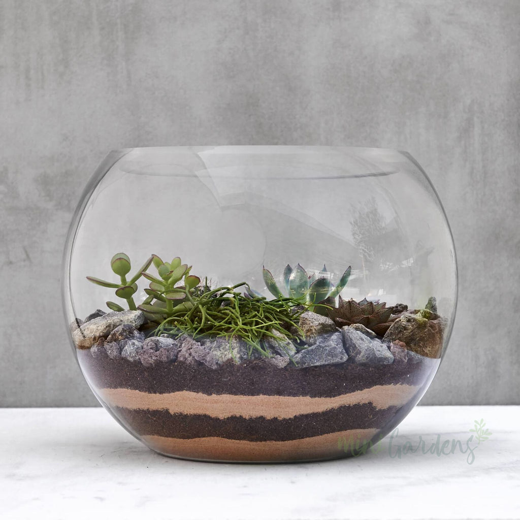 Rock Garden Succulents (Glass Round Wide Large) Minigardens.ae Free Shipping Dubai United Arab Emirates All Minigardens Corporate Gifts