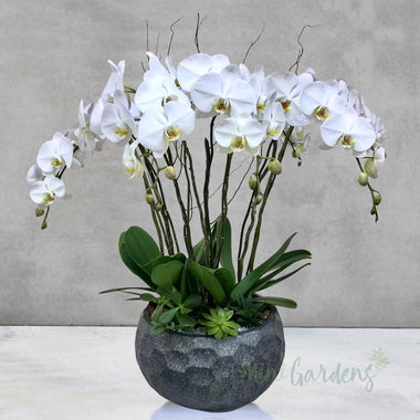 Orchid Tranquility