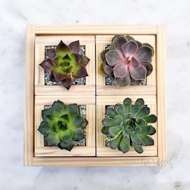 Rustic Garden Gift (Set Of Four) Succulents (Wood Square Medium) Minigardens.ae Free Shipping Dubai United Arab Emirates All Minigardens