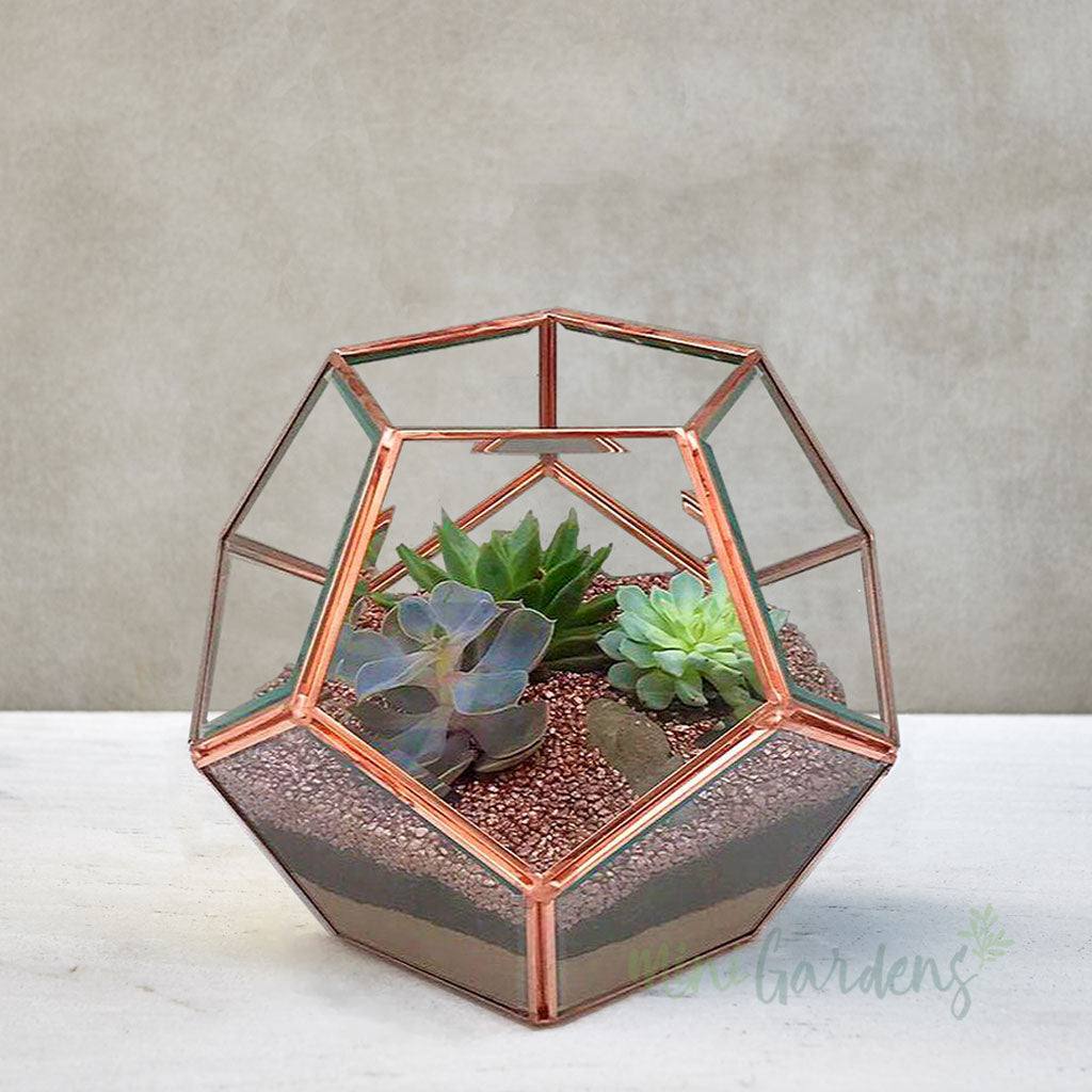 Luxe Terrarium (Medium) Rose Gold
