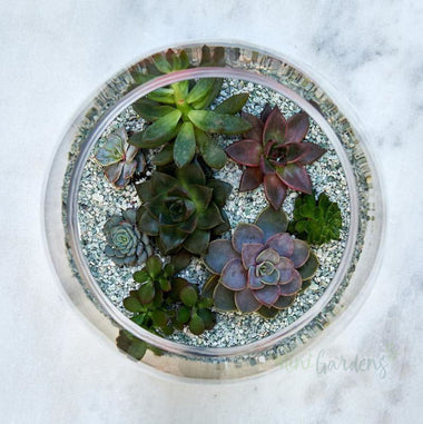 Serenity Succulent Garden Succulents (Glass Round Wide Large) Minigardens.ae Free Shipping Dubai United Arab Emirates All Minigardens