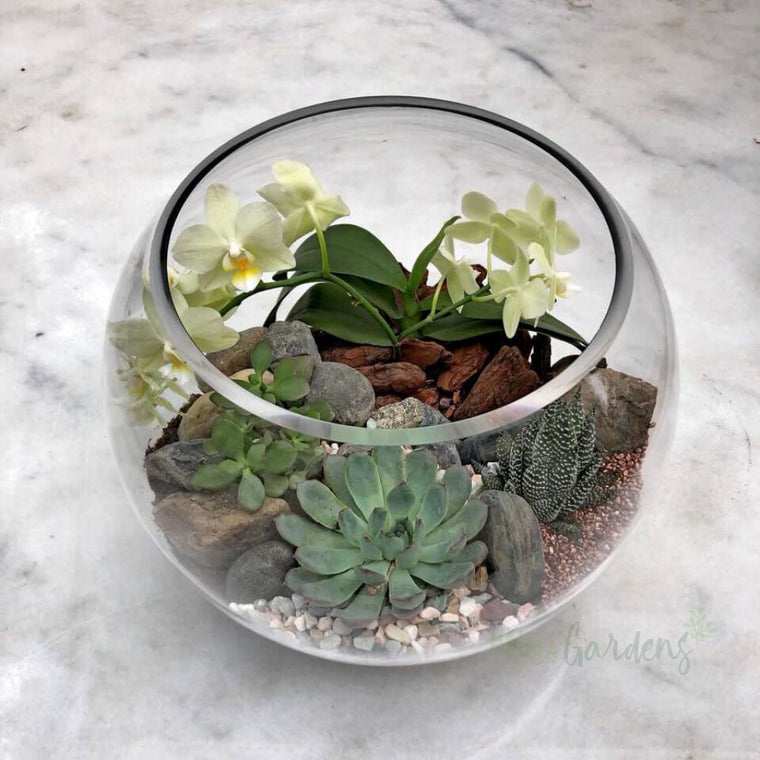 Spring Garden Succulents (Glass Round Wide Large) Minigardens.ae Free Shipping