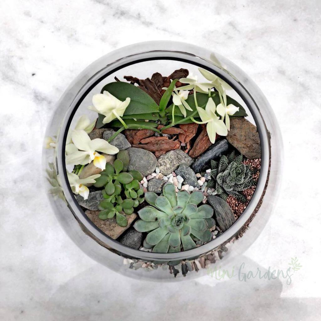Spring Garden Succulents (Glass Round Wide Large) Minigardens.ae Free Shipping Dubai United Arab Emirates