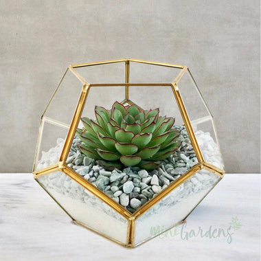Terrarium Garden (Small) Gold - Birthday Gift