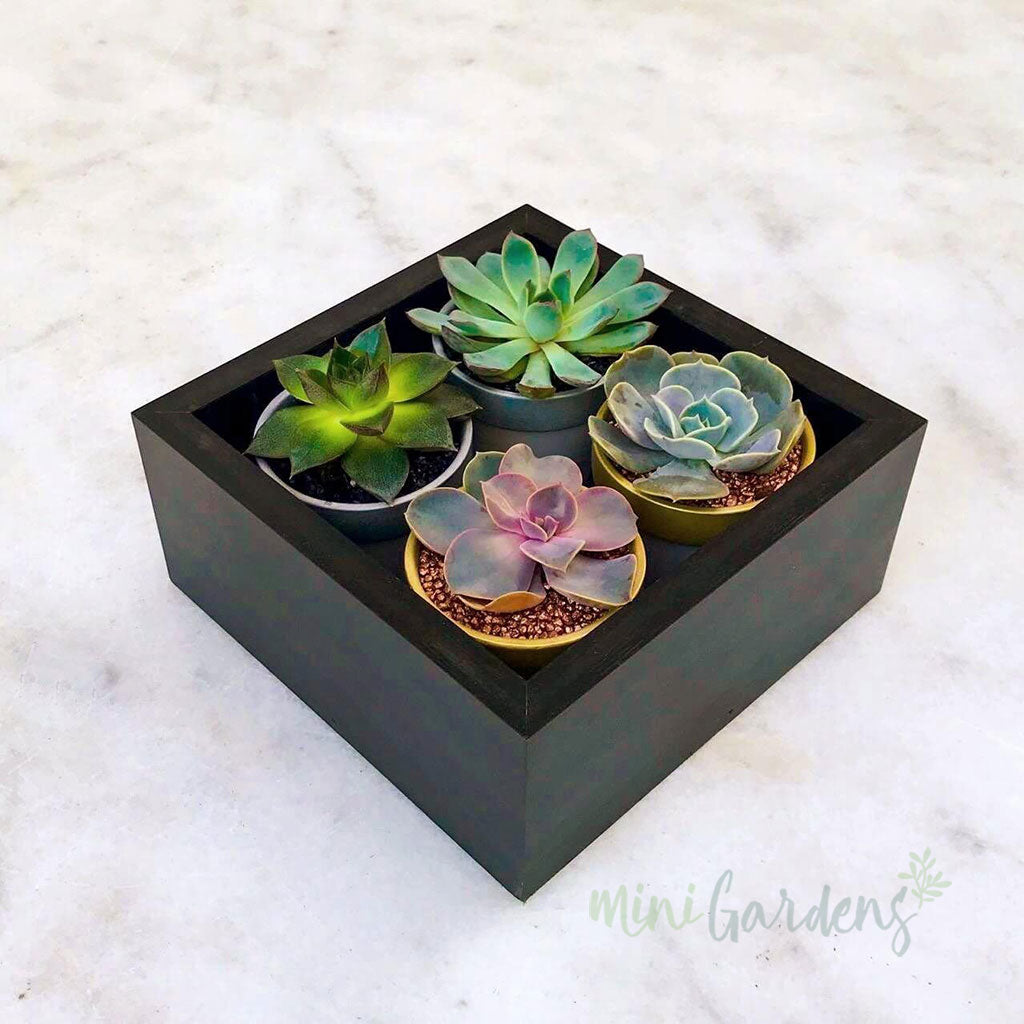 Tiny Garden Gift (Set of 4) Succulents Gifts Send Online MiniGardens.ae Free Delivery in Dubai, UAE.