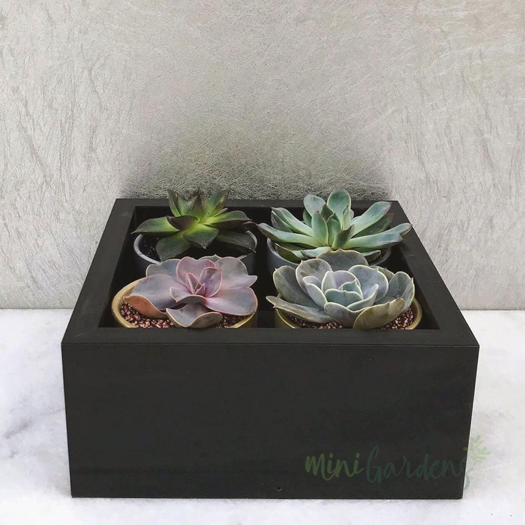 Tiny Garden Gift (Set of 4) Succulents Gifts Buy Online MiniGardens.ae Free Delivery in Dubai, UAE.