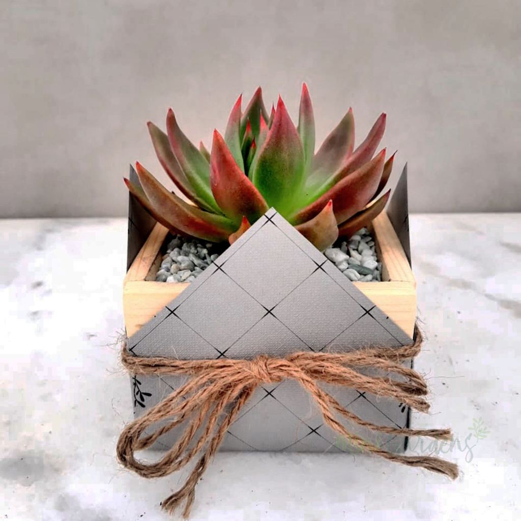 Tiny Garden Party Set Of 50 Pieces Succulents (Wood Square Small) Minigardens.ae Free Shipping Dubai United Arab Emirates Corporate Gifts