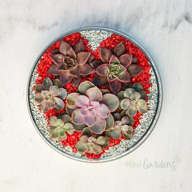 Valentine Succulents (Glass Round Medium) Minigardens.ae Free Shipping
