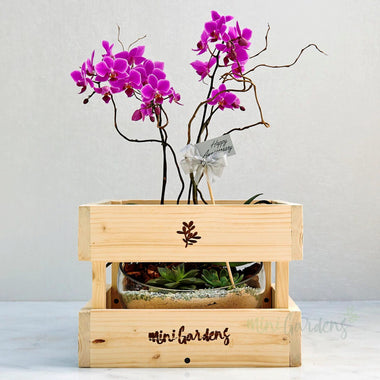 Buy Beautiful Orchids Flowers Gifts from MiniGardens.ae Free Delivery in Dubai, UAE.