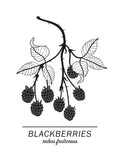Poster: Blackberries, av Paperago