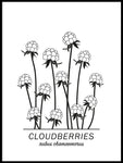 Poster: Cloudberries, av Paperago