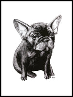 Poster: French Bulldog, av Tvinkla