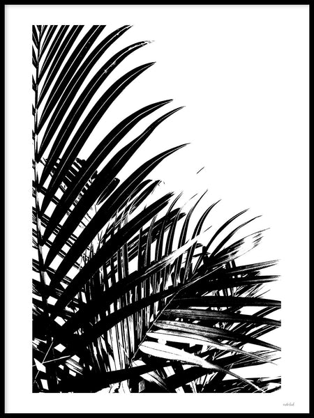 Poster: Palm Leaves I, av Wintherland