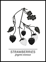 Poster: Strawberries, av Paperago