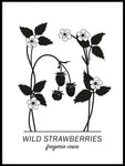 Poster: Wild Strawberries, av Paperago