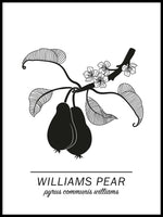 Poster: Williams Pear, av Paperago