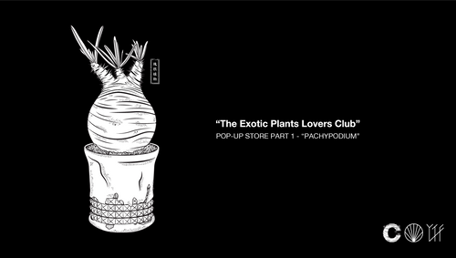 The Exotic Plants Lover Club Part 1: We Love Caudex - CROSSOVER