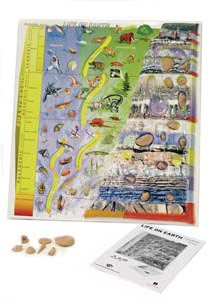 "Fossil History Kit | 3D Model | 23.5"" x 24.5"" 