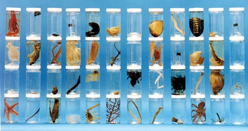 48 Specimens Animal Survey Collection | Guide Included