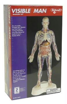 "The Visible Man Kit | Assemble A Human Body | 16"" High On Base"