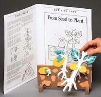 Bookplus Model | From Seed to Plant | Made of EVA Foam