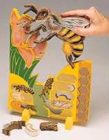 Bookplus Model | Lifecycle of a Bee | Great For Young Children