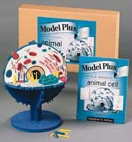 Animal Cell Model | Non Toxic EVA Foam | Teacher's Guide Included