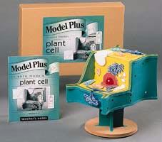Plant Cell Model | Elementary & Middle School Level Science | Great For Hands-On Learning
