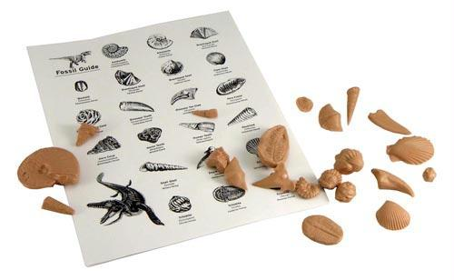 Fossil Kits | Set of 10 Kits | Teacher's Guide Included | Grade 6-12