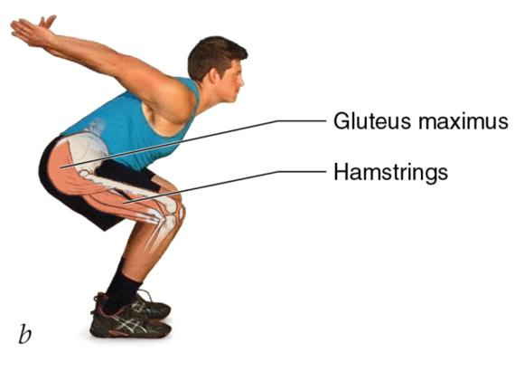 Figure 2.4 Coordinated muscle actions in a vertical countermovement jump: starting position; hip, knee and ankle extend; jump.