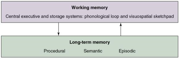 Figure 15.2 The subsystems of the working memory (phonological loop, visuospatial sketchpad, and central executive) interact with the subsystems of the long-term memory (procedural memory, semantic memory, and episodic memory).