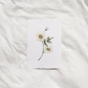Wild Rose Watercolour Print on Handmade Paper
