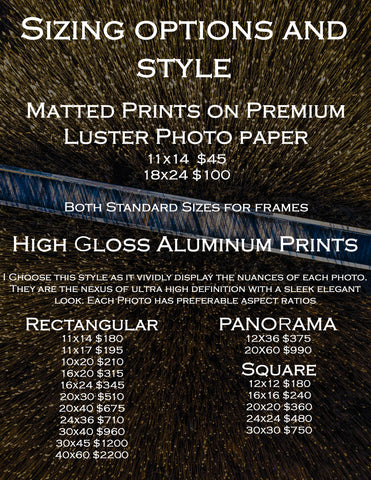 Matthew Raynor photography sizes prices styles