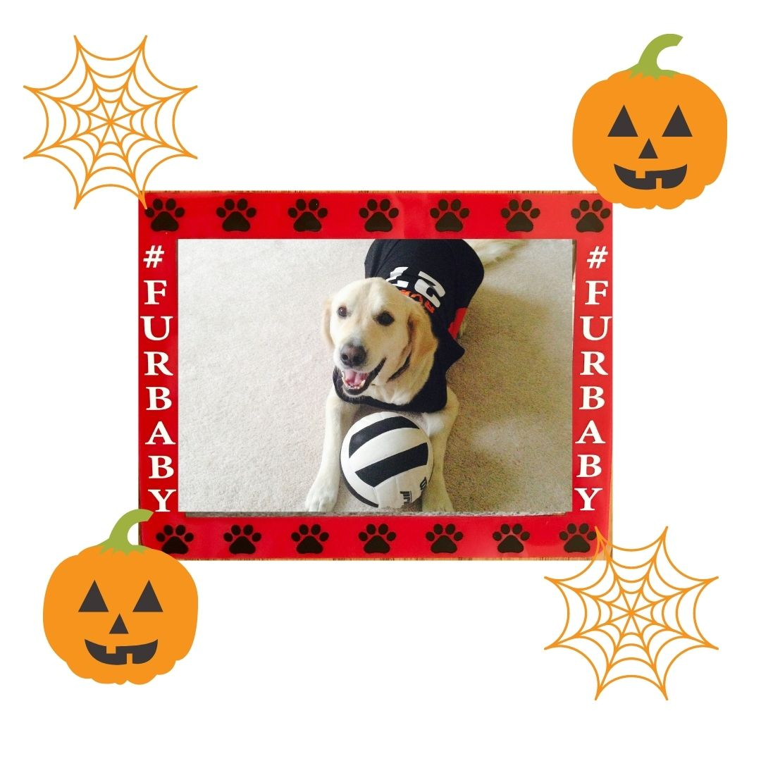 StickitFrame Your Halloween Favorites