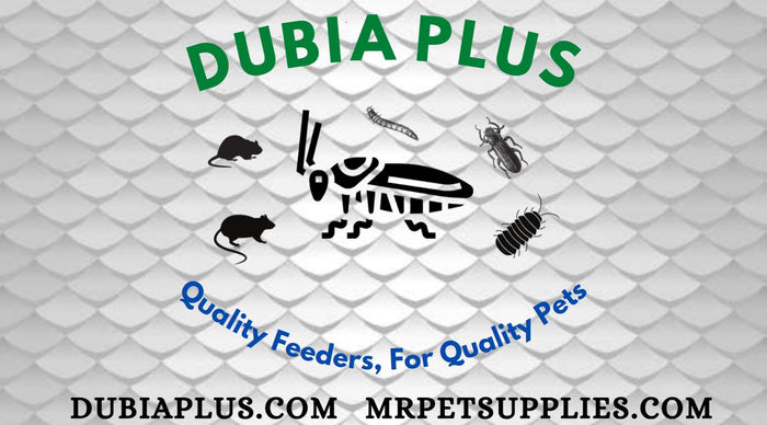 Dubia Plus M.R. Pet Supplies Gecko Bearded Dragon Feeders