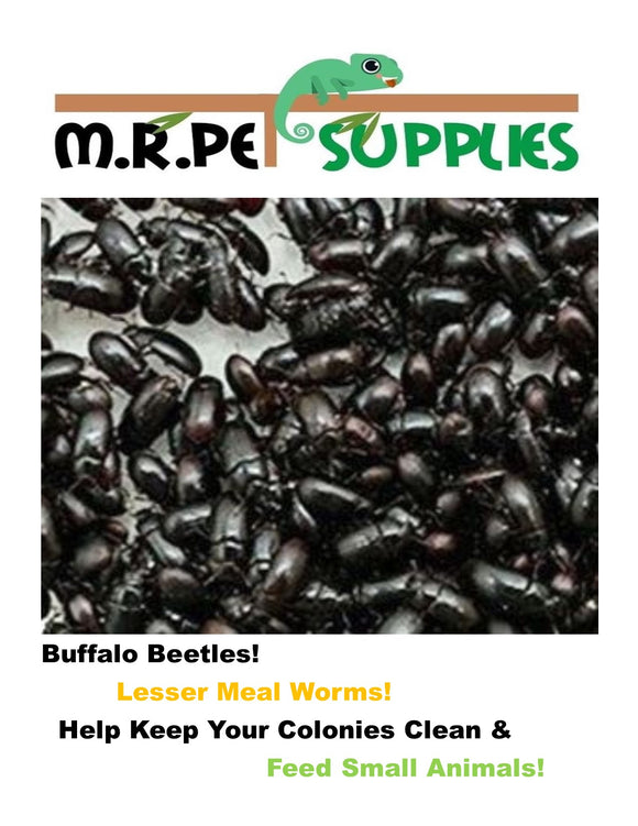 Cleaner Crew - Buffalo Beetle - Lesser Mealworm