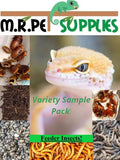 Feeder Variety Pack! - Surprise Hatchling / Baby Reptile