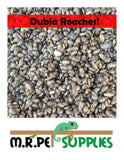 Dubia Roach Feeders - Pet Feeder Live Insects