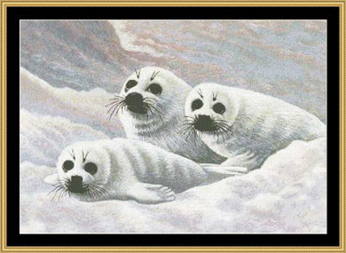 HARP SEAL PUPS MM-46