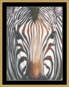 THE MANY FACES – ZEBRA  CLB-11