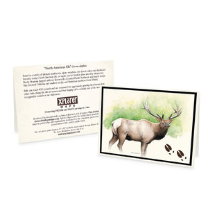 Wildlife Notecards