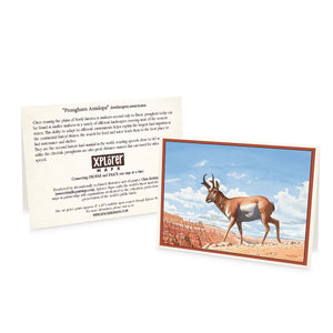 Bryce Canyon Greeting Cards