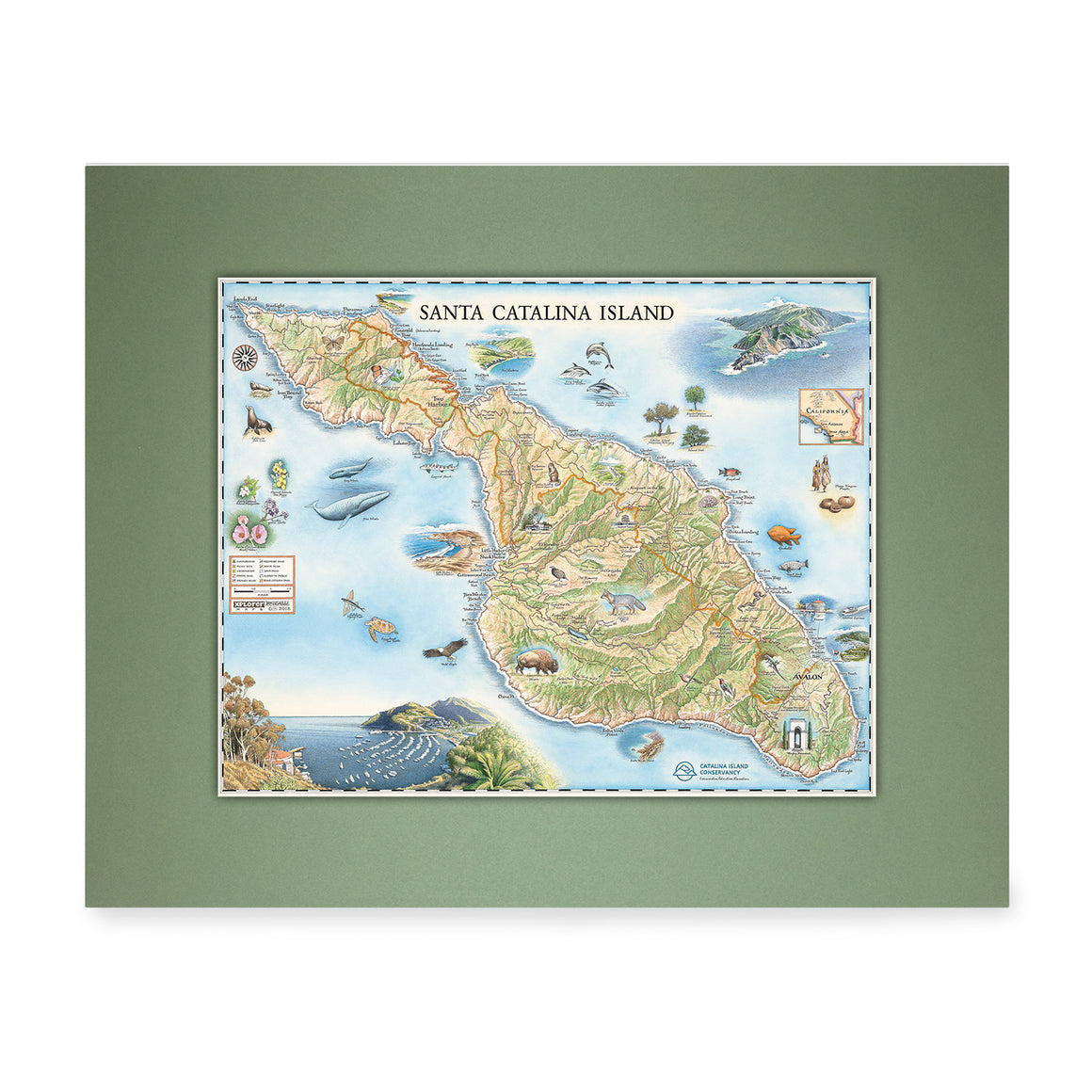 Catalina Map Art - Green Matte