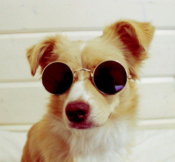 Retro Sunglasses For Small Dogs