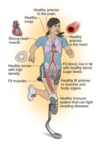 Figure 4.5 Cardiorespiratory endurance requires fitness of many body systems.