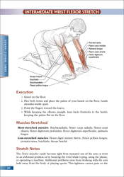 Intermediate Wrist Flexor Stretch