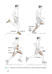 Phases of running