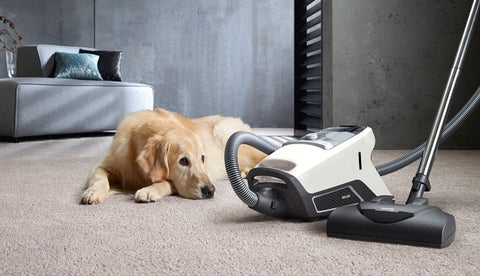 Miele Vacuum- Claim Up to €100 Cashback -Briscoes