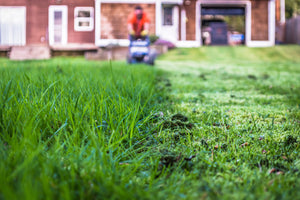 You Killed Your Lawn, Now What?
