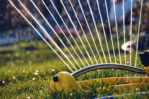 Watering Your Lawn: What You Need to Know